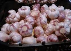 Чеснок повысит урожай картофеля