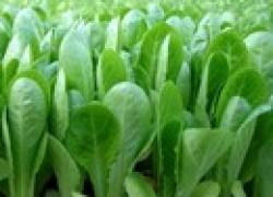 7 способов угодить рассаде
