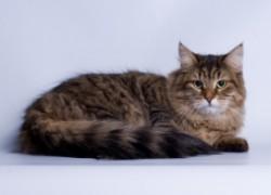 Хотим усыпить 20-летнюю кошку