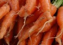 Почему окривела морковь