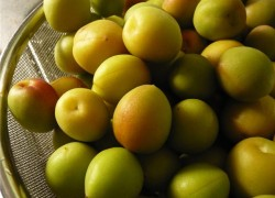 Японский «абрикос»