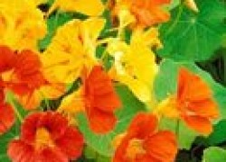 Универсальные растения-биозащитники