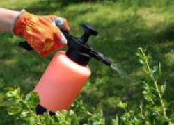 Как защитить смородину от вредителей