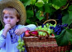 Как определить, созрел ли виноград