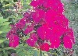 Что посадить в цветнике