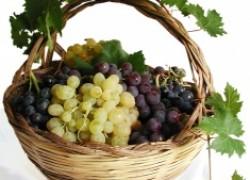 7 советов для начинающих виноградарей