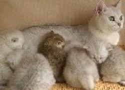 Таблетки от «любви» повлияют на котят?