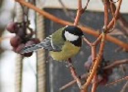 Как отвадить птиц и ос с участка