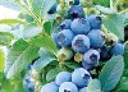 Вкусные и полезные обитатели сада