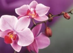 Пересаживаем орхидеи