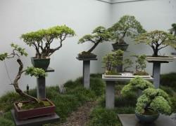 Посадка карликовых деревьев