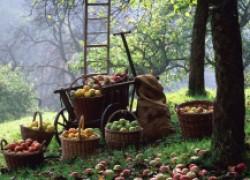 Как очистить сад от вредителей