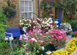 Петуния – универсальное растение для декора двора и фасада