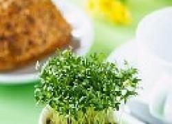 Кресс-салат – полезная зелень на всю зиму