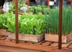 Зелёные витамины круглый год
