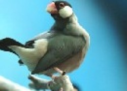 Рисовка – птичка-невеличка