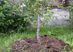 Как посадишь дерево, так будет и расти