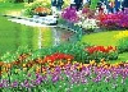 Почему мельчают тюльпаны