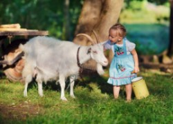 Об отечественных породах молочных коз
