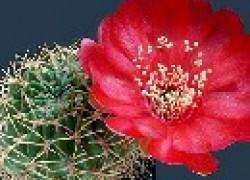 Полив для кактуса