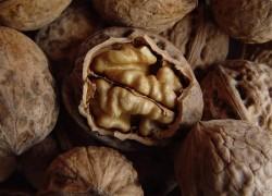 Листья ореха, как удобрение для огорода