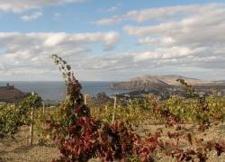 Работы в октябре на винограднике
