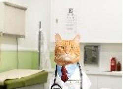 Кошачьи профессии