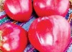 Зачем надо доопылять помидоры