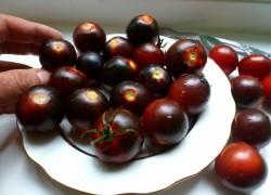 Шоколадные помидоры