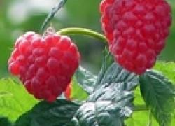 Популярные гербициды