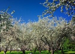 Удобрения — через канавки и скважины