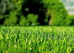 Из чего сделать газон