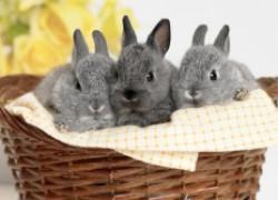 Чем опасно сырое сено для кроликов