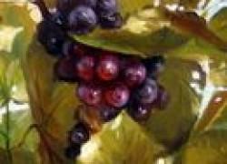 Почему завяли грозди