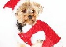 Чем опасен новый год для домашних животных