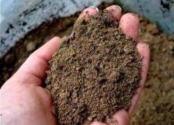 Песчаная почва – особенности выращивания