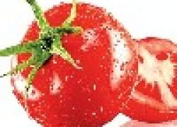 Уничтожить грибки на помидорах