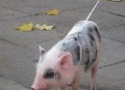 Каких животных можно держать в городе