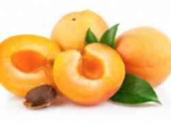 Прививка на абрикос
