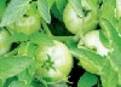Дневник огородника «хозяйства»