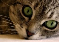Кошка из подъезда