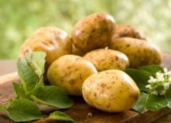 Картошкины проблемы