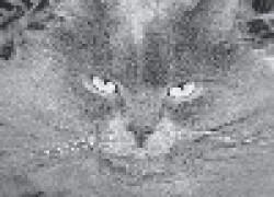 Лохматый кот - много забот