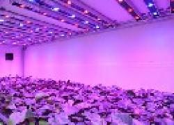Преимущества светодиодного освещения в теплицах