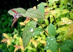 Чем опасны дожди