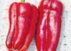 Выращиваем супер крупный перец