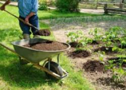 О подкормке рассады конским и куриным пометом