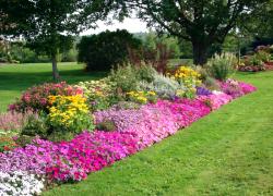 Самые красивые цветы для цветника