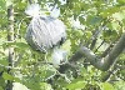 Выращиваем дерево на дереве