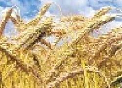 Сила живого зерна